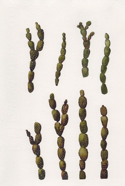 seaweed2_0001.jpg