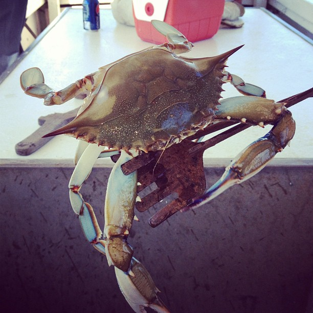 First Crab