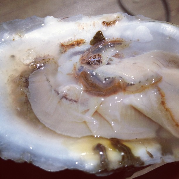 Fresh Choptank Sweets oyster