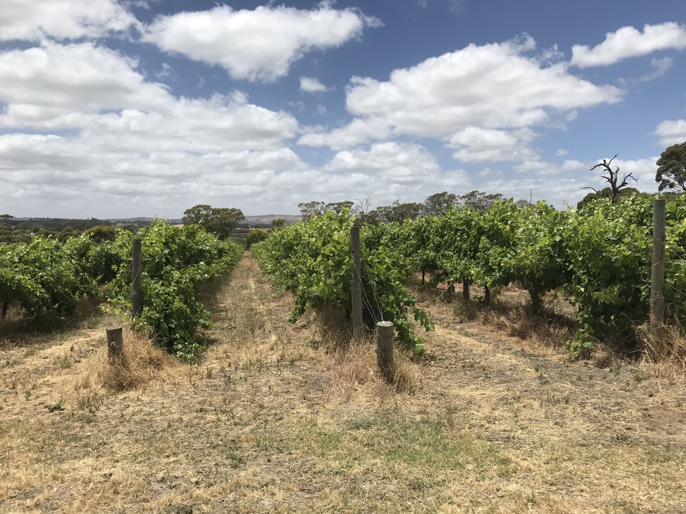 Adelaide and South Australia Wine Country