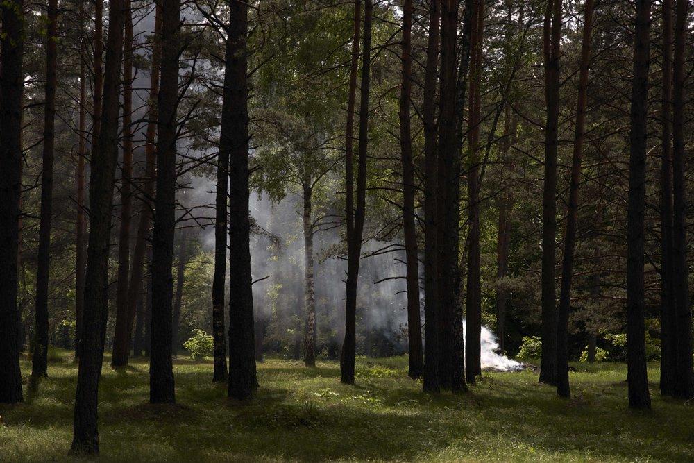 LatviaForestR.jpg