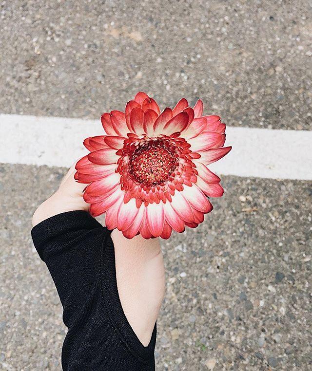 Thank you sweet friend @kristenmulvany for this pretty flower that was waiting for me at class this morning! #LOVEWEEKF4M @fit_4_mom . . . . #babyjack #veganbaby #vegan #veganmama #thatsdarling #modernmama #boymom #dailyparenting #momswithcameras #instabest  #themodernmamahood #vegansnack #whatveganseat #motherhoodunplugged  #vegan #healthylifestyle #weightloss #healthcoach #veganmama #vegansofig #veganlife #blogging #bloglife #momblog #momblogging #blog #blogger #lifestyleblogger #themodernmamahood