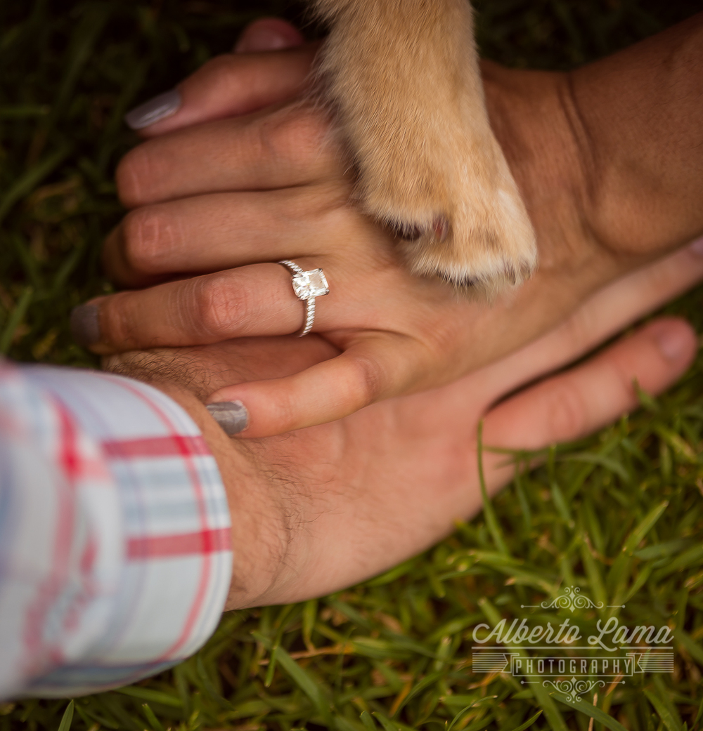 Engagement session, Brooklyn Bridge, rainbow wall, yes,  wedding, bride, dog