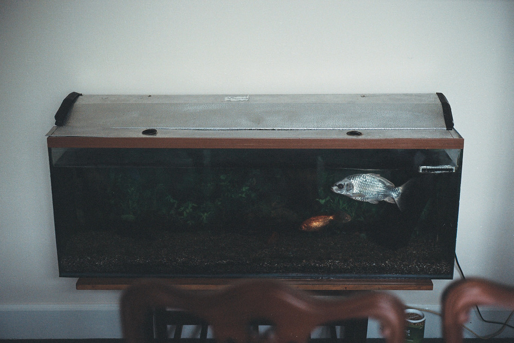 Alex_fish tank.jpg