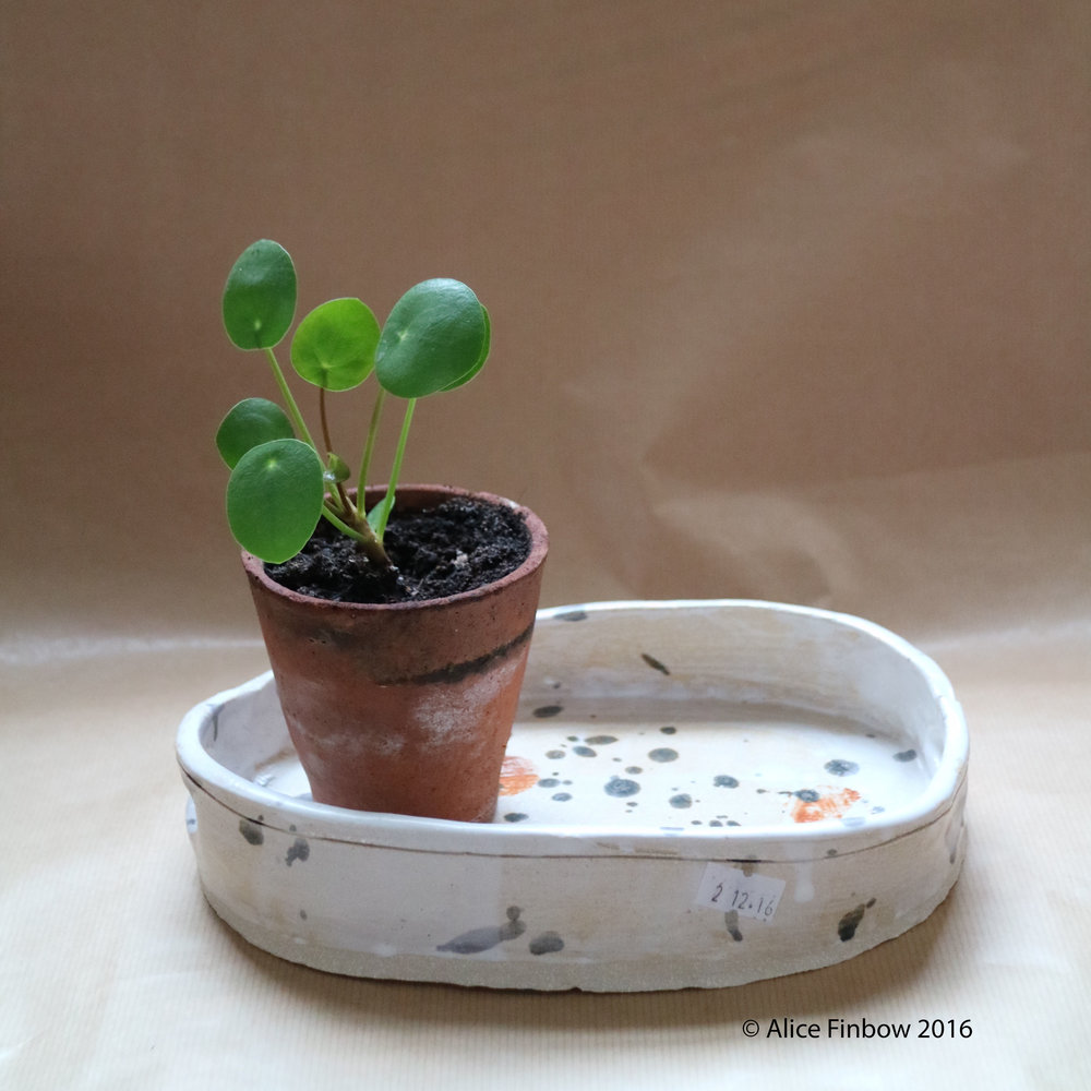 tray and plant 1.jpg