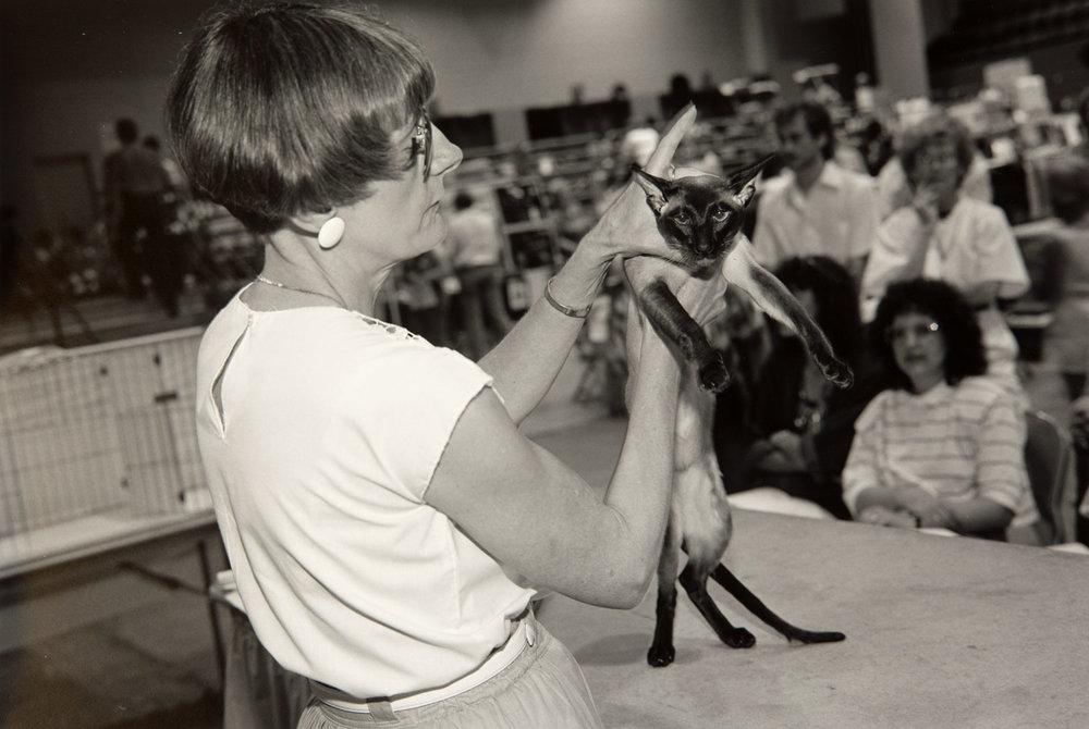 Cat Show, Rochester, Minnesota