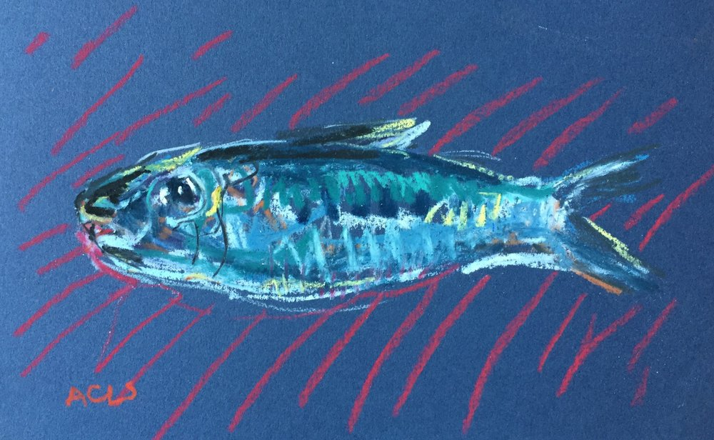 Mackerel small 2.JPG