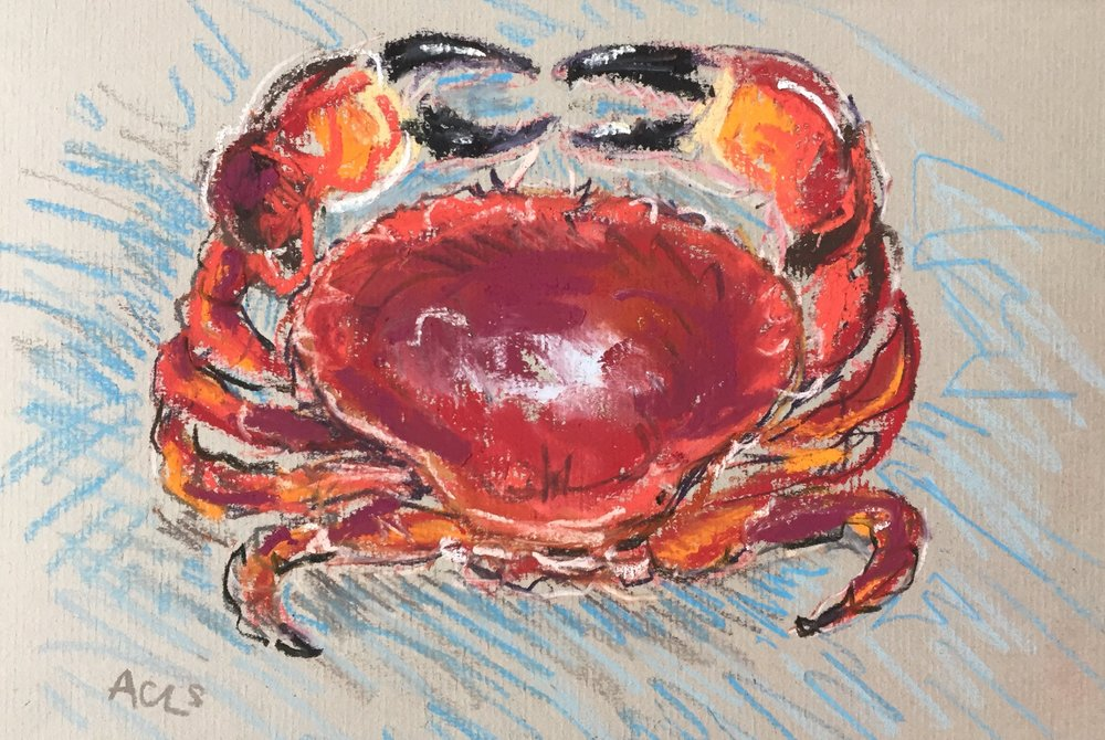Red crab on blue.JPG