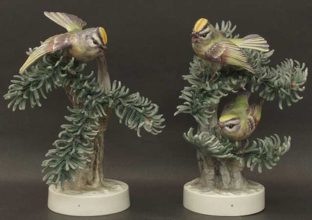 Golden Crowned Kinglets & Noble fir.jpg