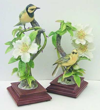 Hooded Warblers & Cherokee Rose.jpg