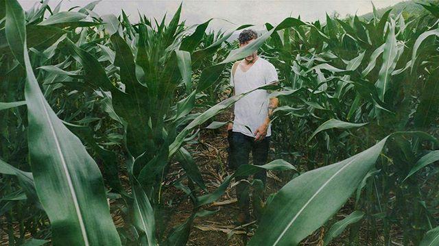 Chris in the cornstalks • • #naturelove #nashville #cornfield #