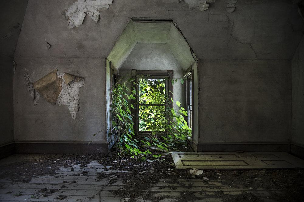 Window Vines.jpg