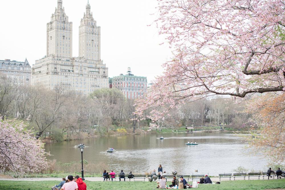 Anahi+David- Central Park Elopement- New York City- Olivia Christina Photo (94).JPG