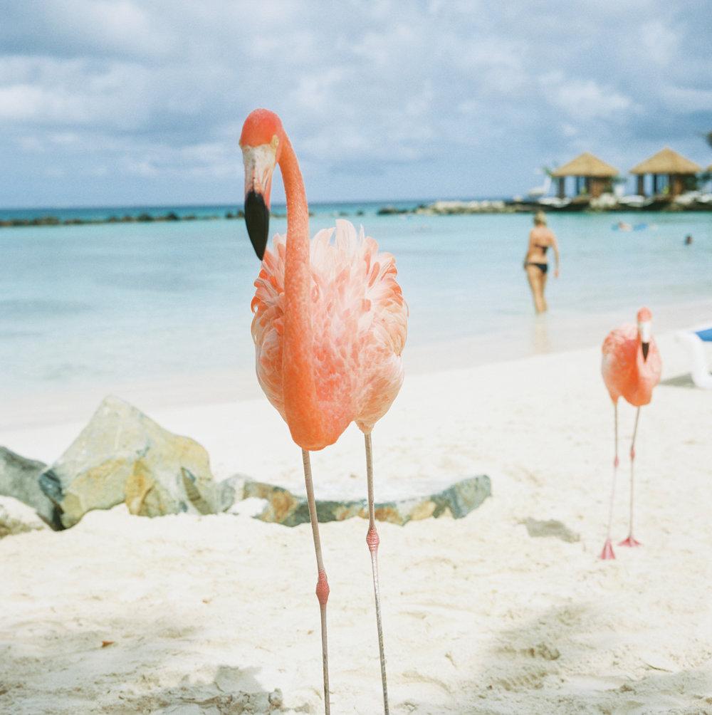 Travel Photography- Film Photography- Aruba- Olivia Christina Photo-6.JPG