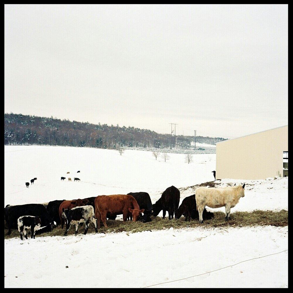 Old Homestead Farm, PA