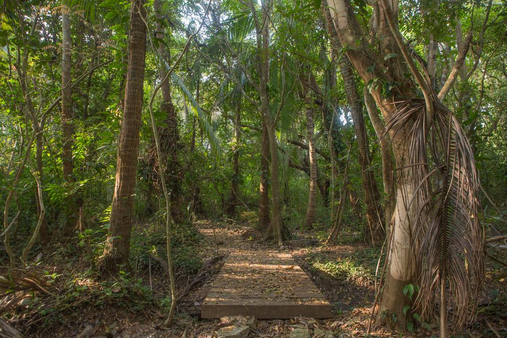 AMA Forest Web-26.jpg