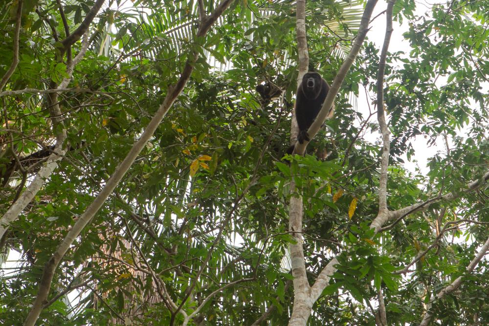 AMA Forest Web-16.jpg