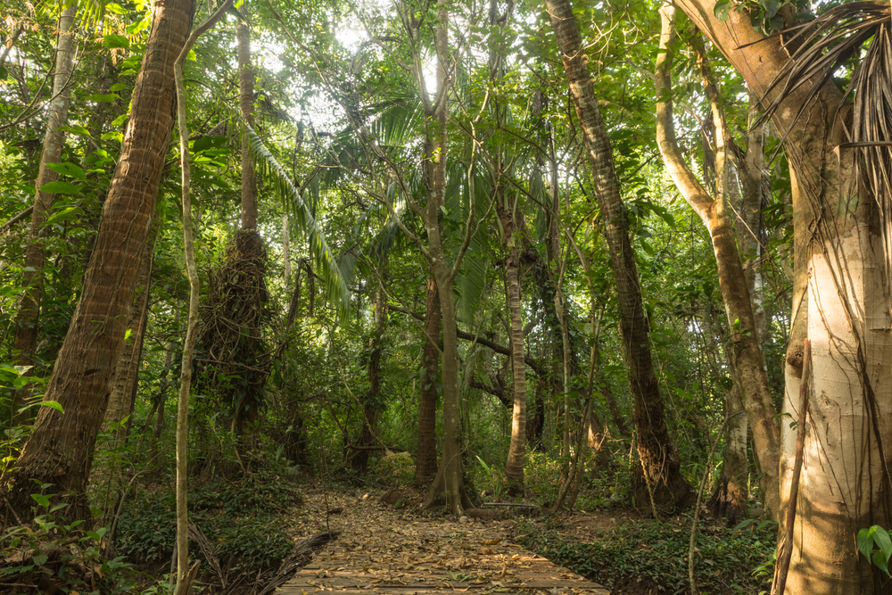 AMA Forest Web-17.jpg