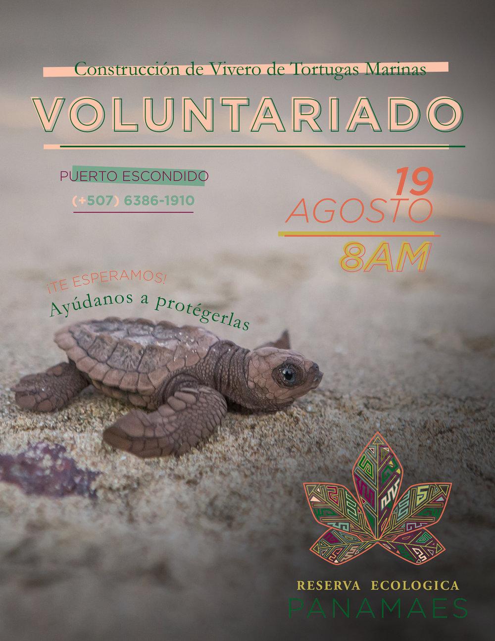 REP Turtle Poster August 2017.jpg