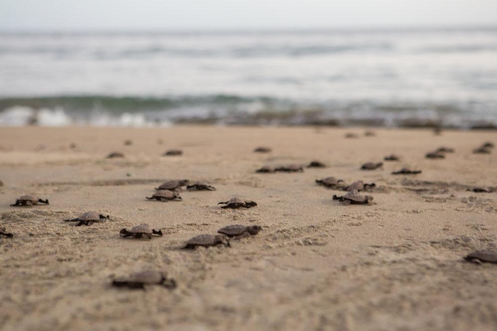 Turtles-55.jpg