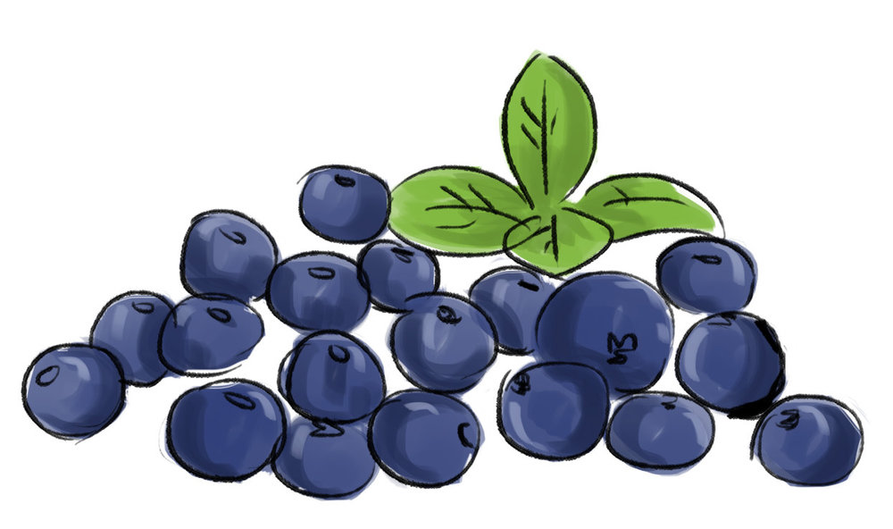 Blueberries - rich in vitamins, minerals and antioxidants