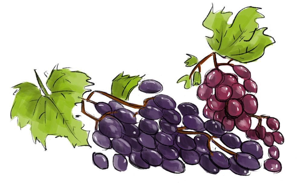 Grapes - vitsmin C, antioxidants, selenium