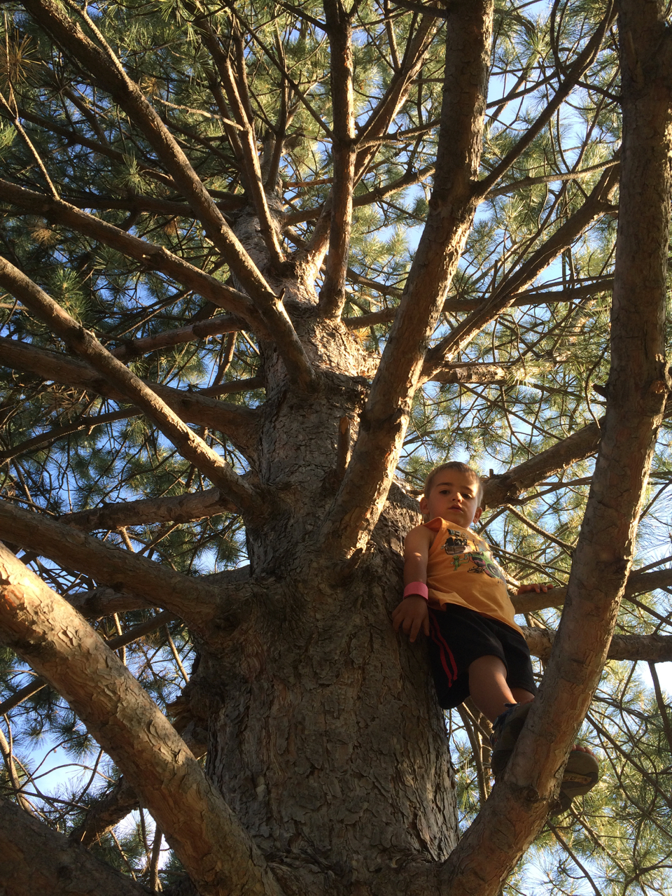 Tree climbin'  |  August  |  Fort Collins, CO