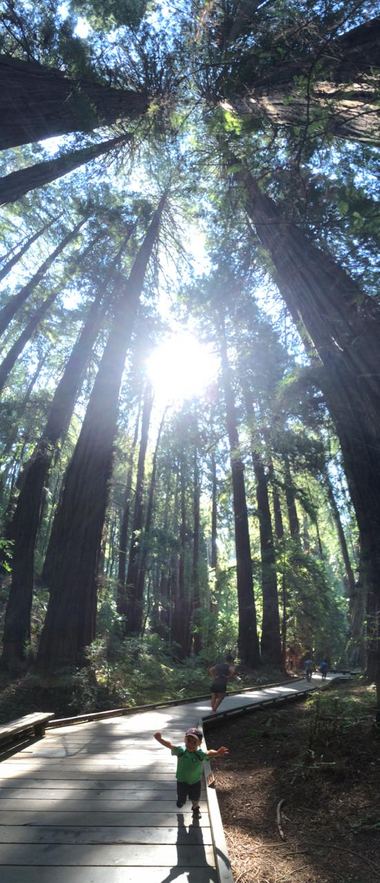 Redwoods | September | Muir Woods/Mill Valley, CA
