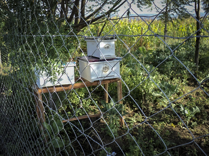 Demonstration apiary
