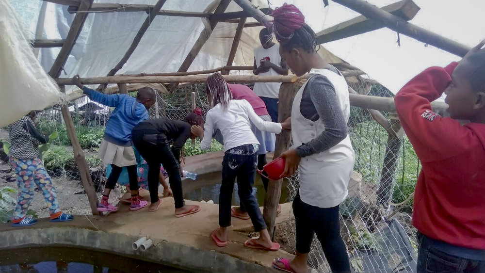 Members of the Youth Training Programme investigate the fish ponds