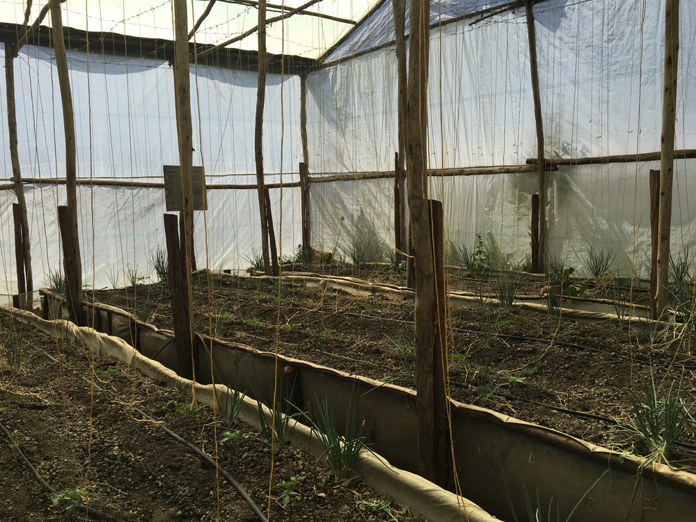 Greenhouse plants are fertilized with the effluent water from the fishponds
