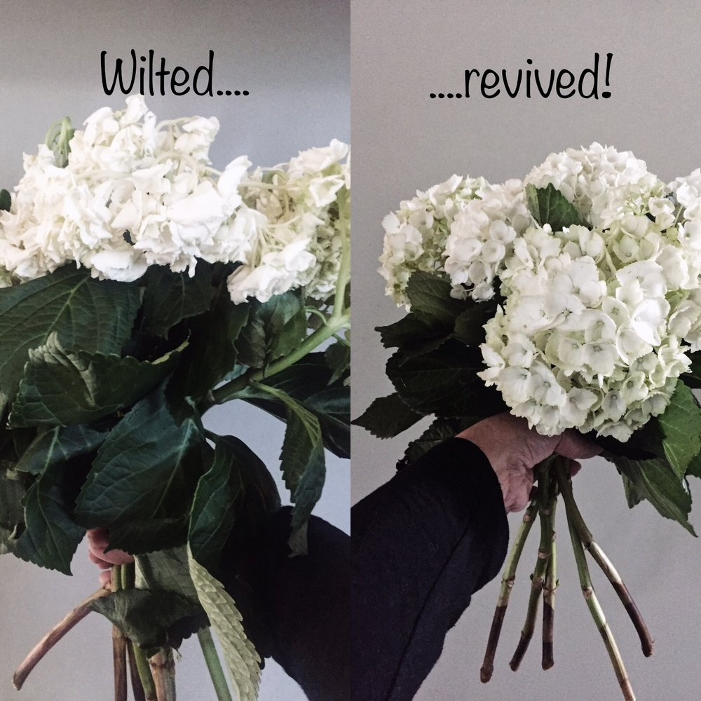 revive_wilted_hydrangeas_www.oandystudio.com