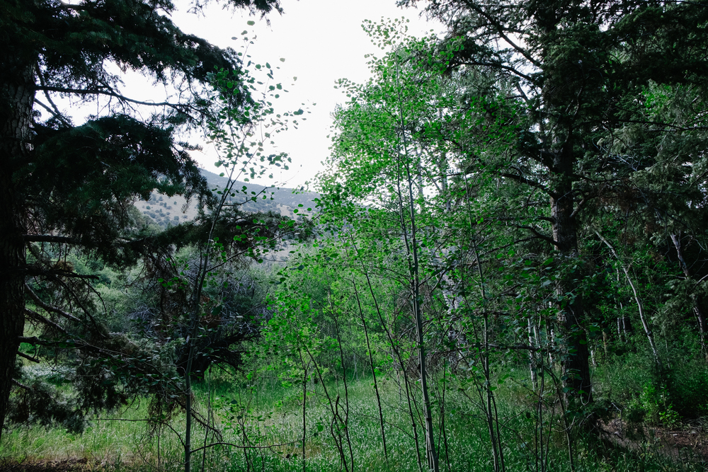 Baker Creek is home to hikes and trails in a park that is bustling with life.