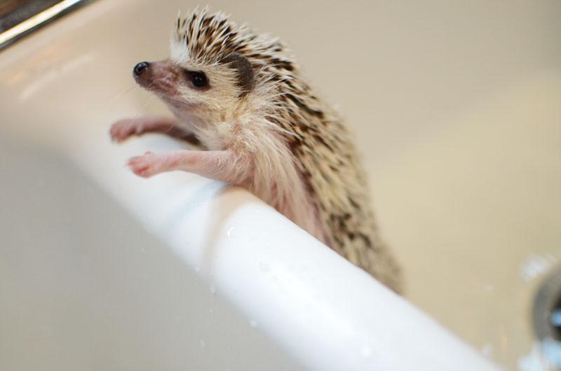 Bathing Polly-11