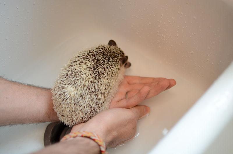 Bathing Polly-2