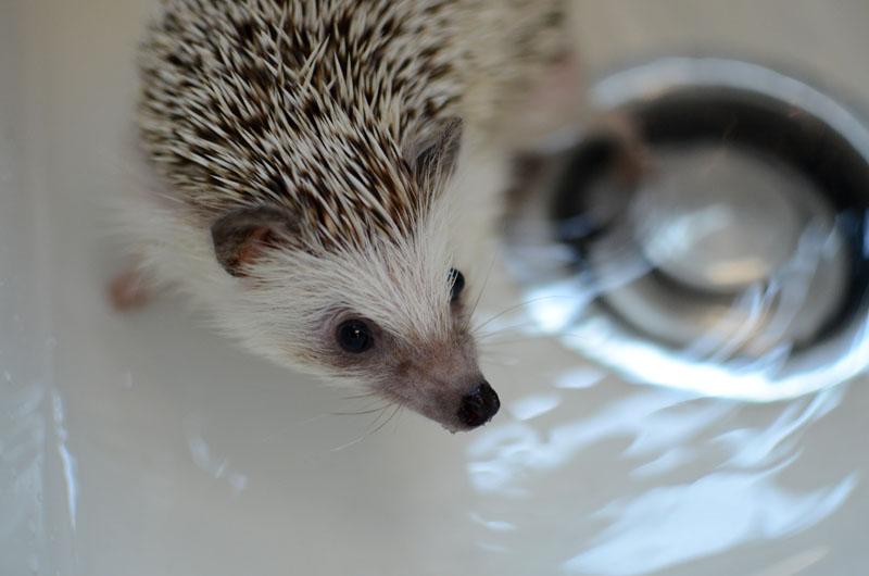 Bathing Polly-3