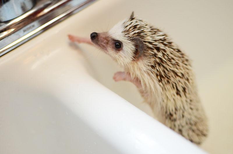Bathing Polly-8