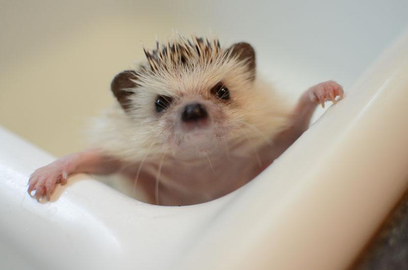 Bathing Polly-9