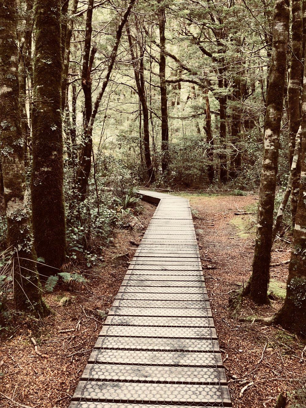 7. Original New Zealand Path.jpg