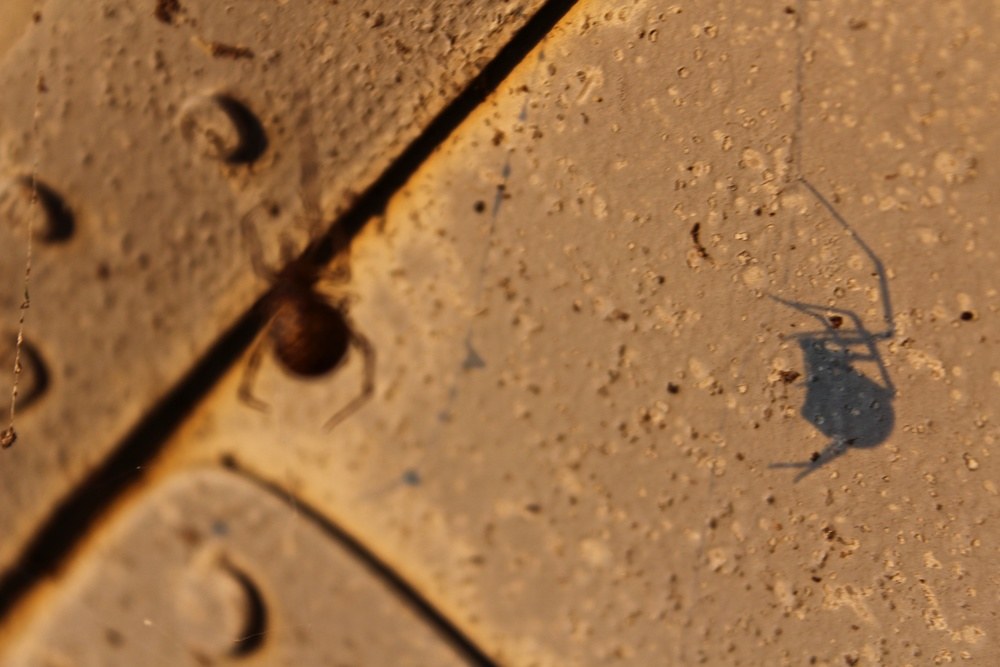 Shadow of a Spider