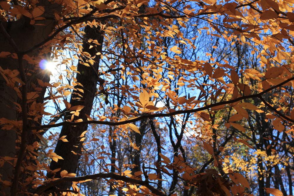 Schenley Park Fall