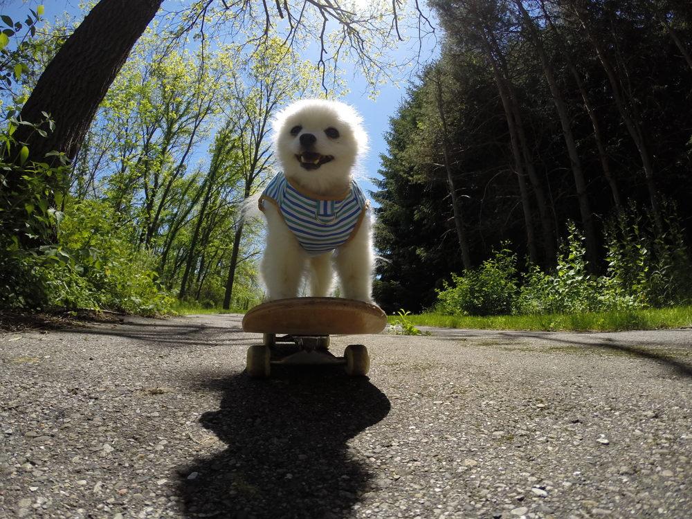 Skateboarding Biscuit