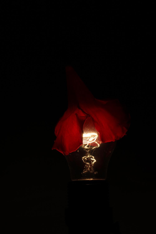 Flower Petal Lightbulb