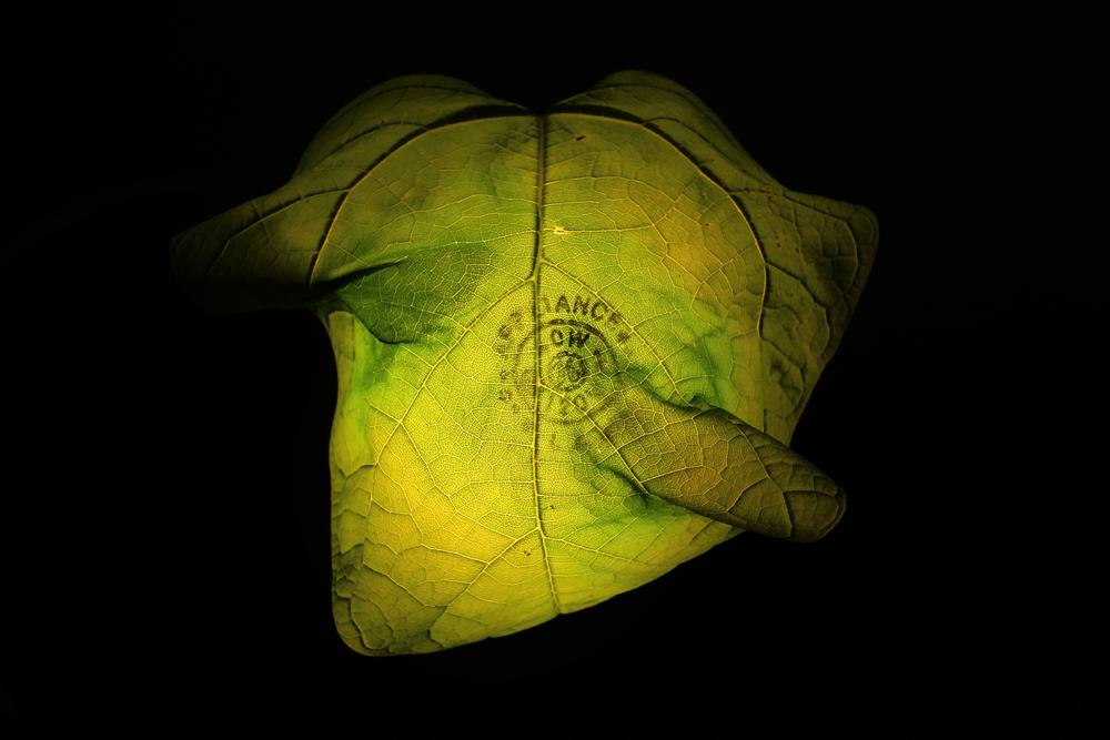 Leaf Burns on Lightbulb