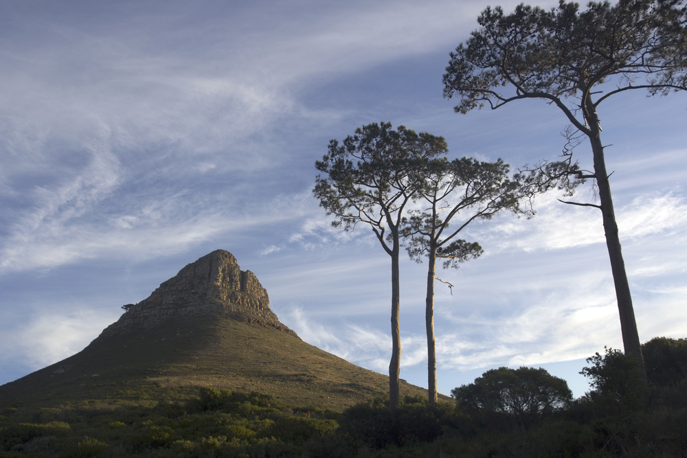 Lions Head and Trees