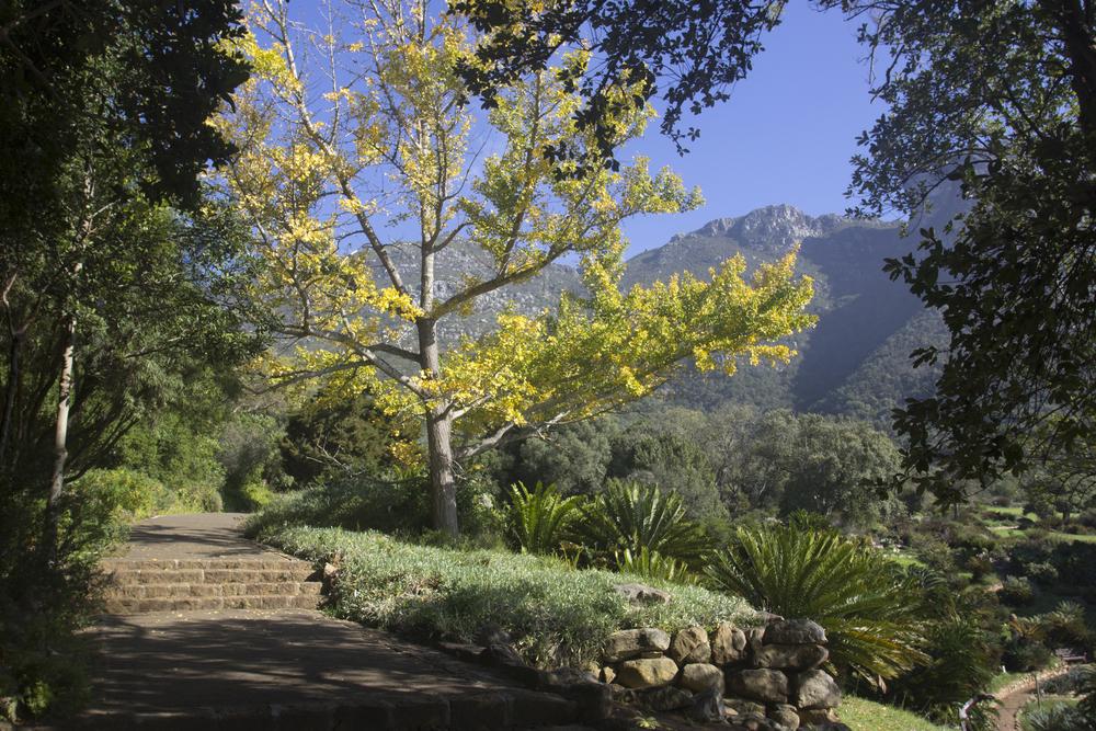 Kirstenbosch Botanical Gardens 1
