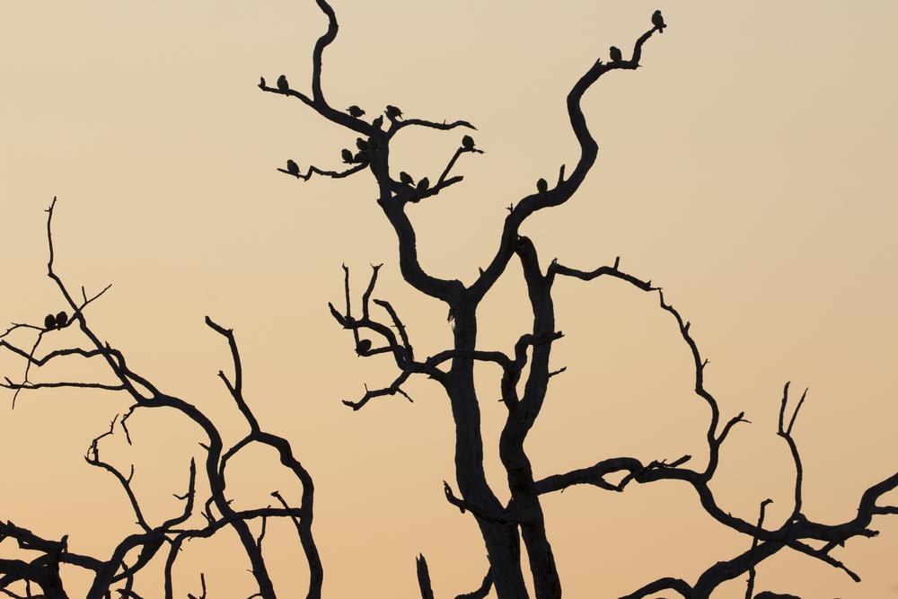 Sunrise Birds