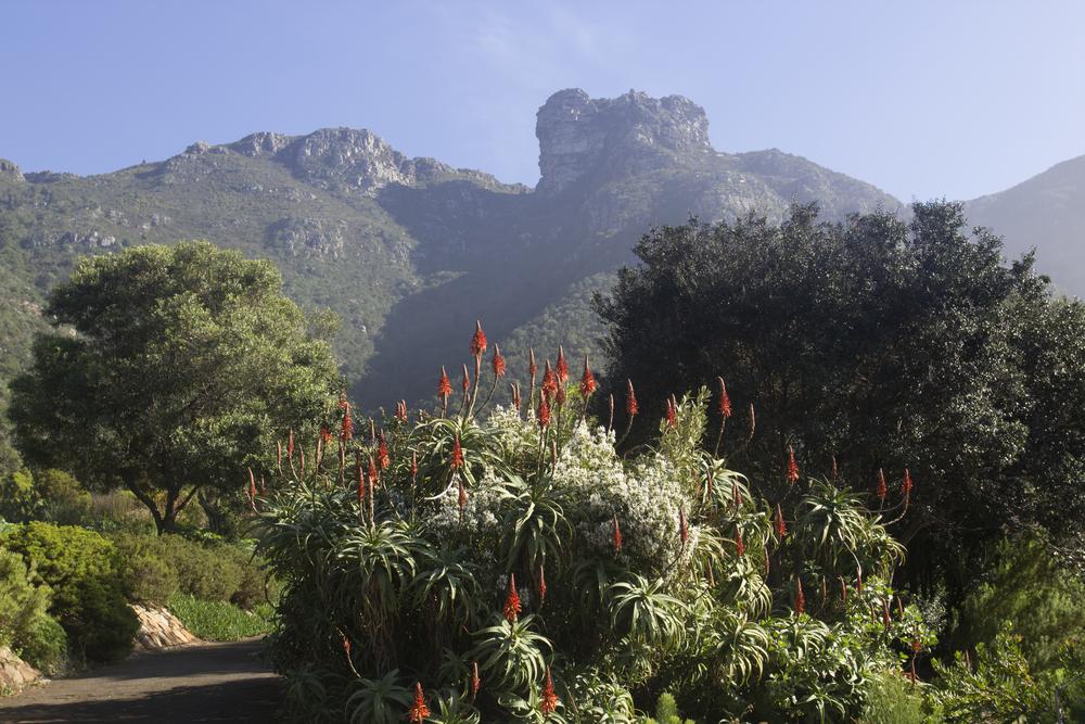 Kirstenbosch Botanical Gardens 2