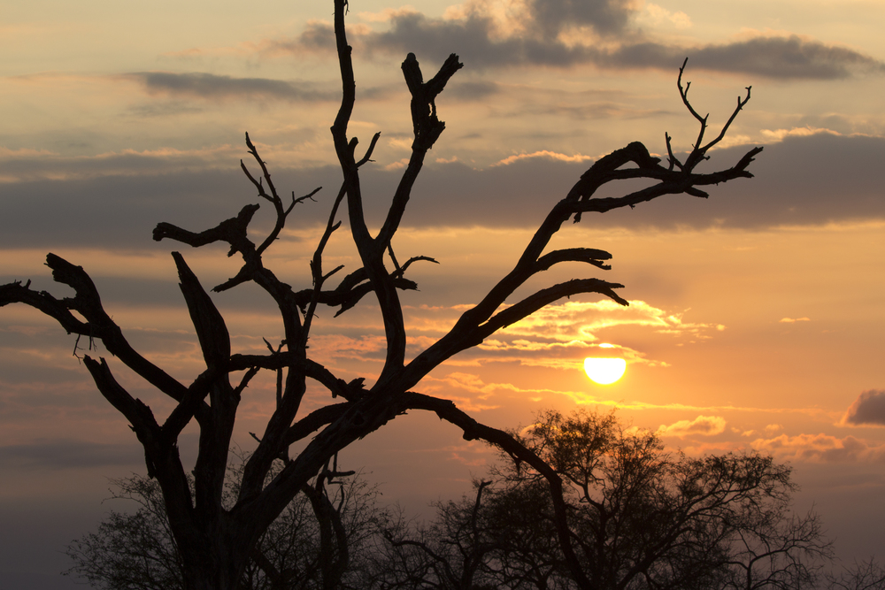 Kruger National Park Sunset