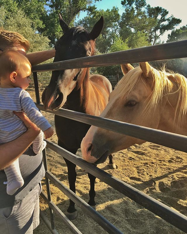 Meeting the guys 🐴 #misterhyde #lincolnjay #hydeawayranch